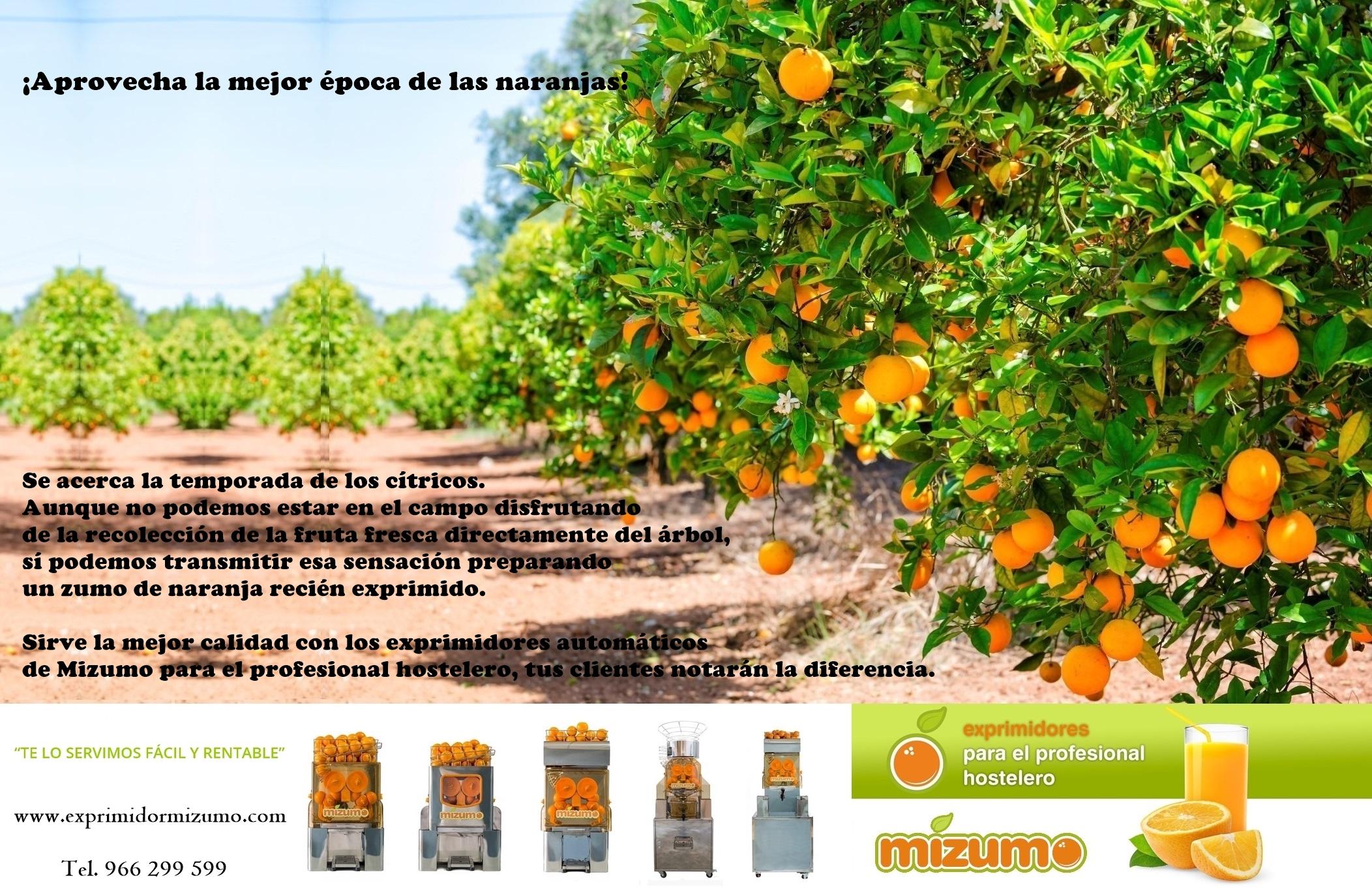 La mejor época de las naranjas